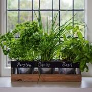 Giardino di Erbe per interni